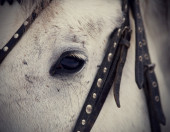 An eye of a white horse. — Stock Photo