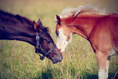 Portrait of two foals. — Stock Photo