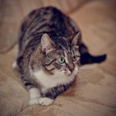 Gray striped cat with green eyes. — Stock Photo