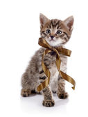 Striped kitten with a bow. — Stock Photo
