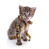 The striped mewing kitten with a bow. — Stock Photo