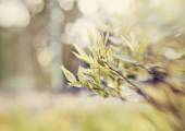 Willow branch on blurred background with bokeh. — Stock Photo