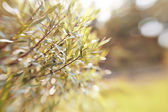 Blurred abstract background with bokeh with branches of willow. — Stock Photo