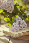 Branches of a lilac and old books — Stock Photo