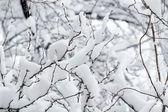 White snow on the tree branch — Stock Photo