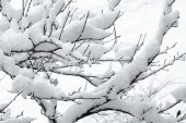 White snow on the tree branch — Stock Photo