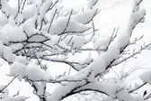 White snow on the tree branch — Stockfoto