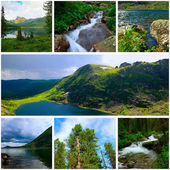 Summer mountain and forest landscapes — Stock Photo
