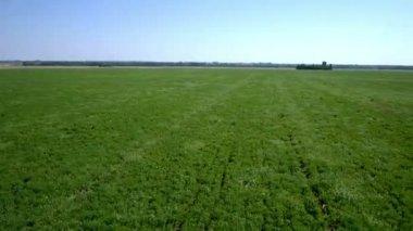 Grass field landscape. — Stock Video
