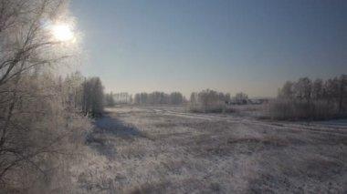 Träd med snö i vinter landsbygdens park — Stockvideo