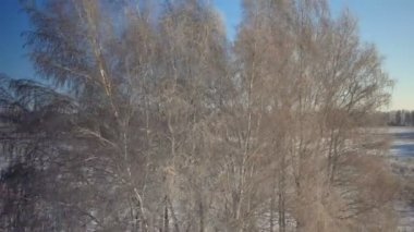Trees with snow in winter rural park — Stock Video