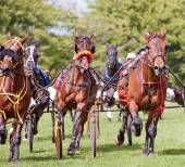 Trotting Race — Stock Photo