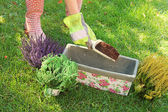 Gardener preparing to plant flowers in pot with soil — Stock Photo