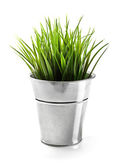 Green grass in metal bucket isolated on white — Stock Photo