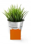 Green grass in bucket with blank greeting card — Stock Photo