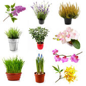 Collection with different flowers and plants, isolated on white — Stock Photo