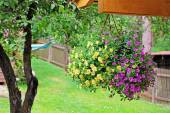 Flower pot with colorful petunia hanging in backyard — Stock Photo