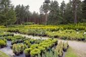Plant nursery — Stock Photo