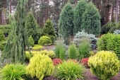 Design garden landscape with mix of plants — Stock Photo