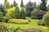 Beautiful garden landscape with variety of conifers and other pl — Stock Photo
