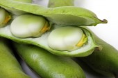 Close up of broad beans — Stock Photo