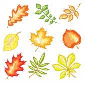 Autumn Leaves Set — Stock Vector