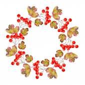 Wreath of viburnum — Stock Photo