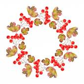 Wreath of viburnum — ストックベクタ