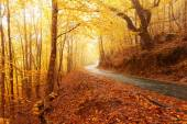 Autumn landscape with road — Stock Photo