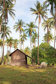 Traditional village of Palawan, in the Philippines — Stock Photo