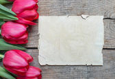 Tulips and paper — Foto de Stock