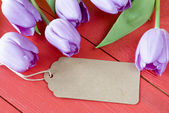 Violet Tulips   with paper tag — Stock Photo