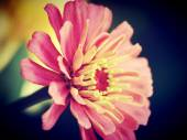 Beautiful  flower in vintage style and edit by filter images — Stock Photo