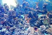 Fish Aquarium in Srisaket , Thailand — ストック写真