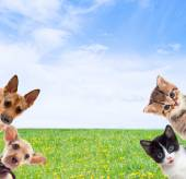 Pets on a background of green grass — Stock Photo