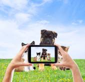 Photographing pets smartphone on the green lawn — Stock Photo