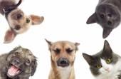 Set pets watching — Stock Photo