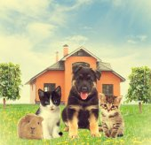 Pets are sitting on the green lawn in front of house — Stock Photo