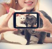 Girl with two cats photographed on a smartphone — ストック写真