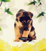 Perrito perdido — Foto de Stock
