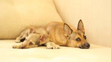 Funny domestic dogs — 图库视频影像
