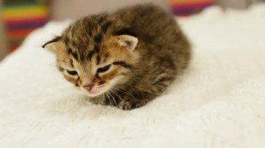 Awakening of a small kitten — Stock Video