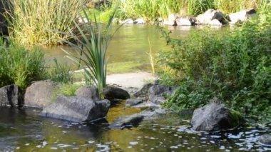 Deep pond water — Vidéo