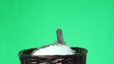 Rabbit in a wicker basket — Stock Video