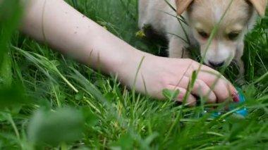 Playful puppy drinks milk — Stock Video