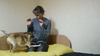 Woman playing with joyful dog — Stock Video