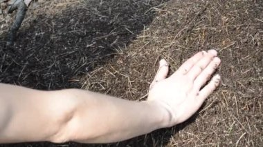 Hand on the anthill — Stock Video