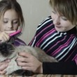 Mother and daughter with kitten — Stok video #61862171