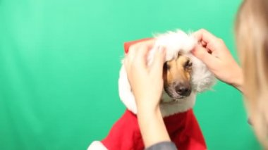 Puppy mutts dressed in Christmas costume — Stock Video