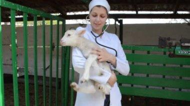 Veterinarian checking lamb — Stock Video